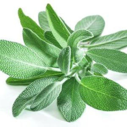 Picture of SAGE (30G)