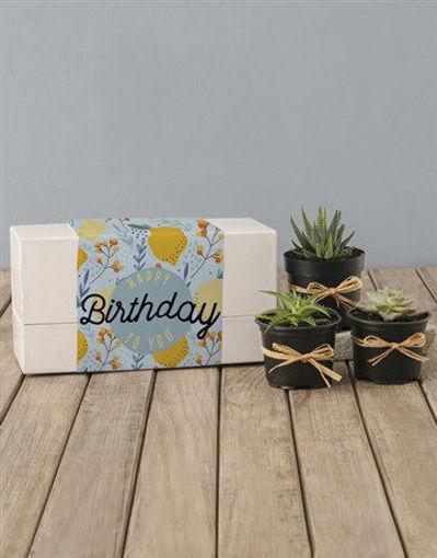Picture of Lemon Succulent Birthday Box